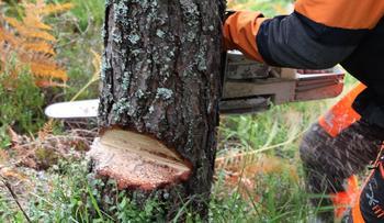 bilde av mann som feller et tre